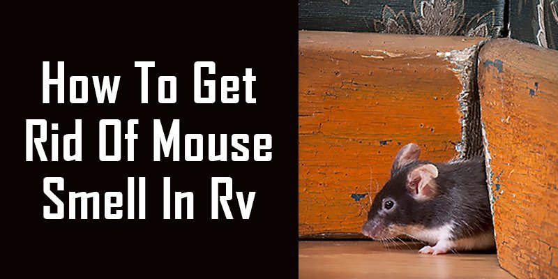 how to get rid of mouse smell in RV