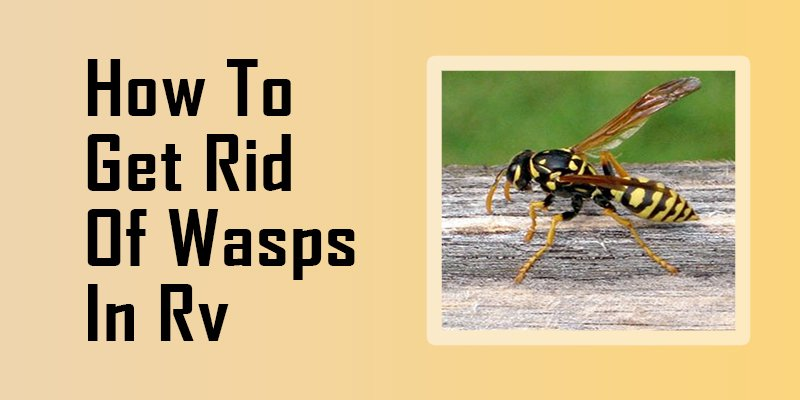 how to get rid of wasps in RV