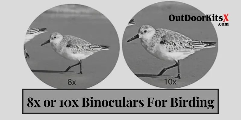 8x or 10x Binoculars For Birding